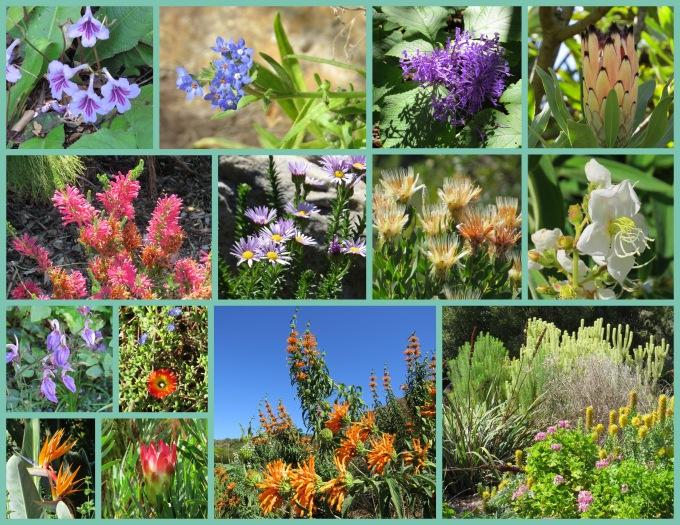flowers of kirstenbosch botanic garden