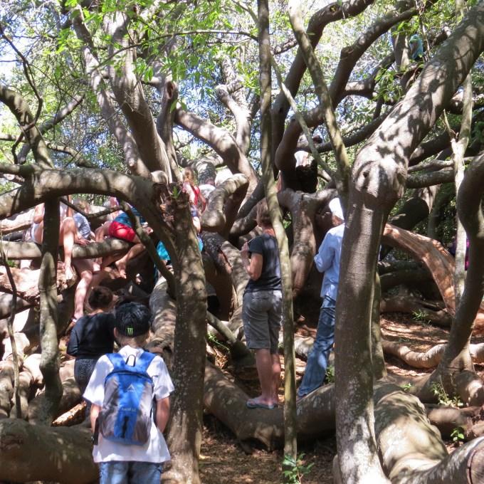enchanted forest kirstenbosch botanic garden