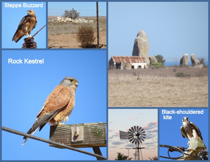 raptors and tumbleweeds south africa