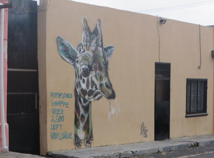 endangered giragge