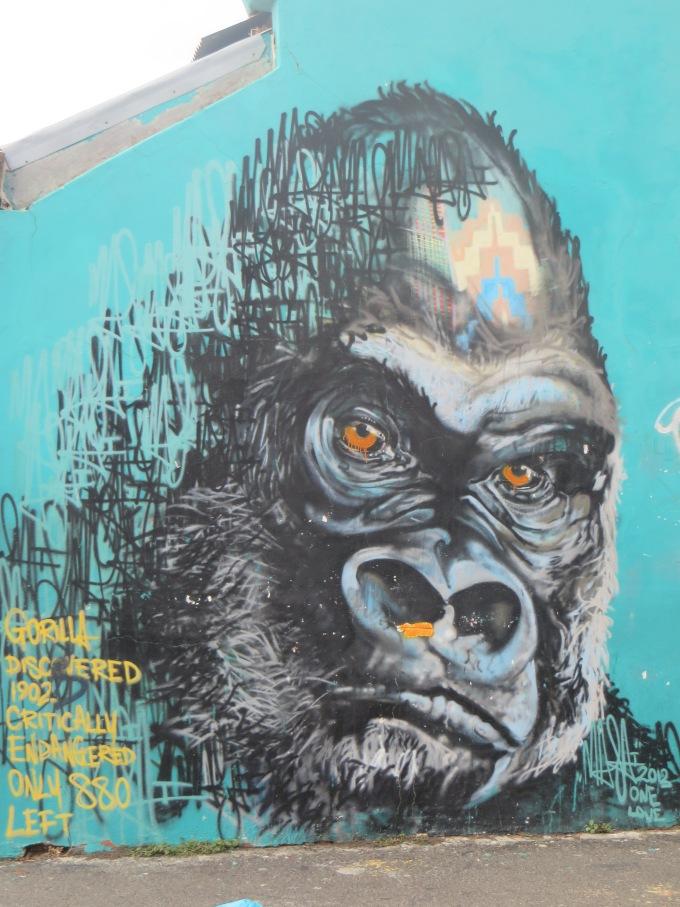 endangered gorilla