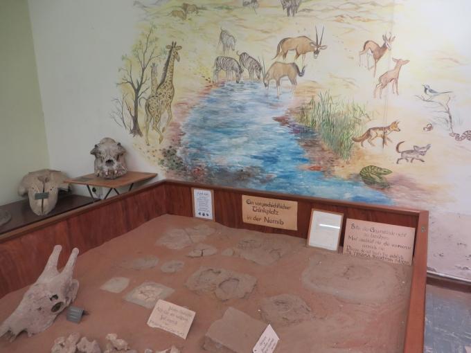 luderitz museum animal bones