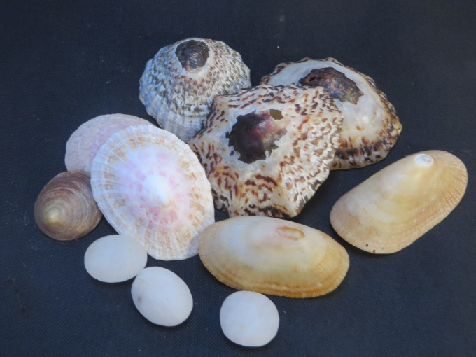 shells at sturmvogelbucht
