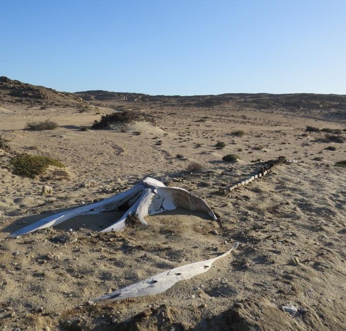 whale bones at sturmvogelbucht