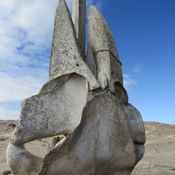 whale skull at sturmvogelbucht