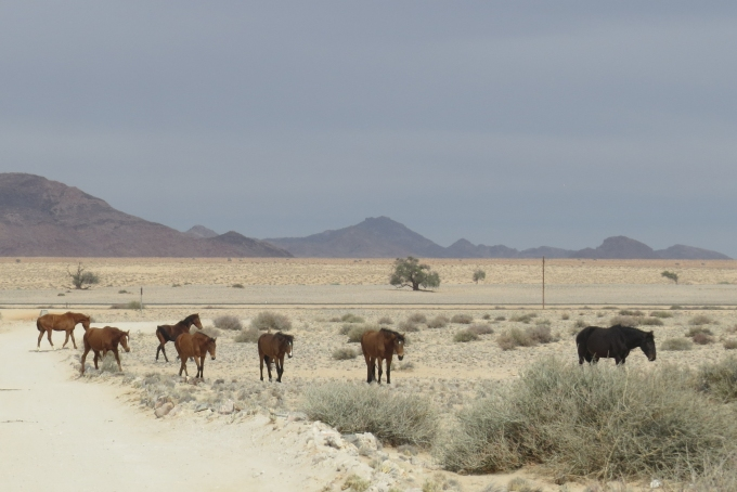 line of horses in namib desert