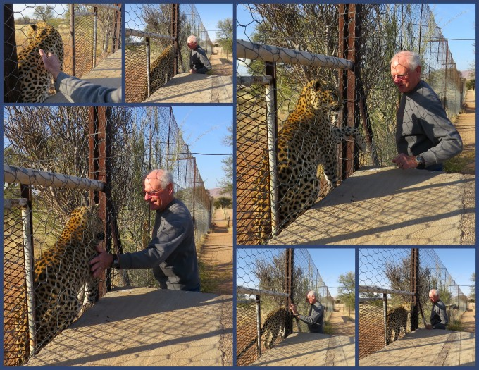 david and lisa the leopard at hammerstein lodge in namibia