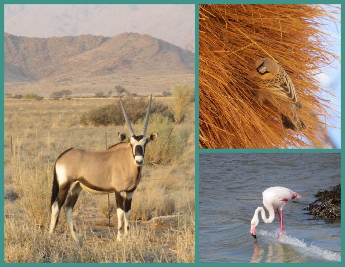 boks and birds collage namibia