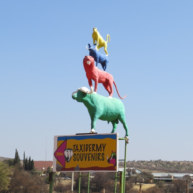 taxidermy animas in namibia