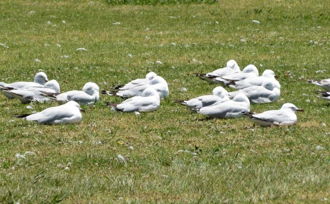 hunkered down birds in namibia