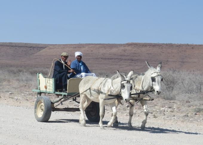 nama donkey cart in namibia