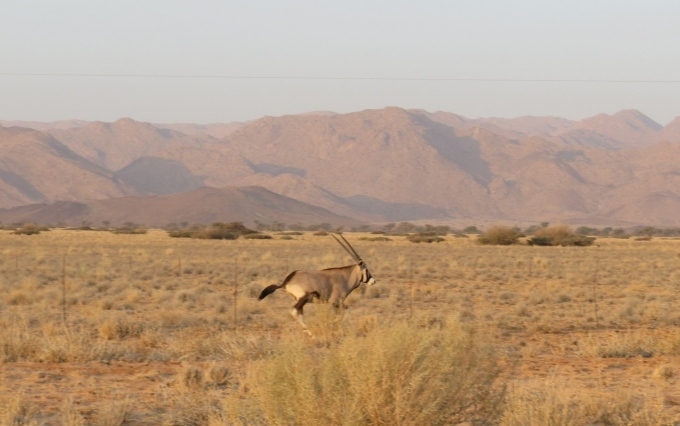racing an oryx in namibia