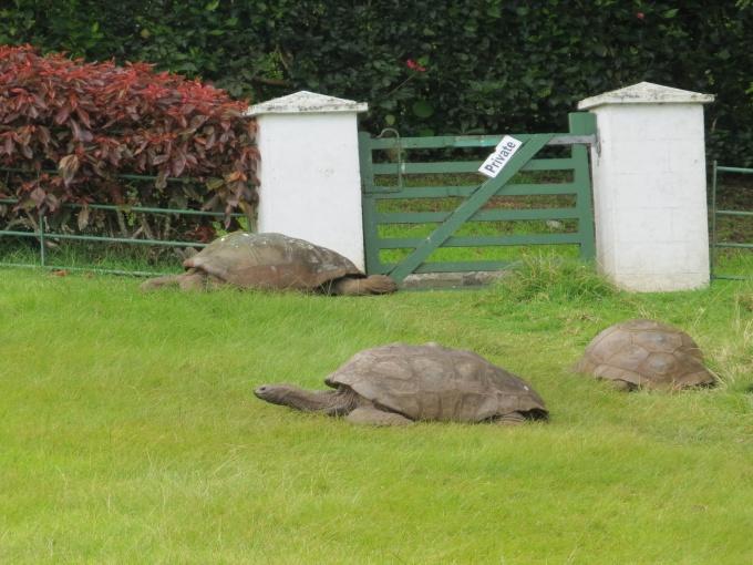 jonathon tortoise of st. helena island