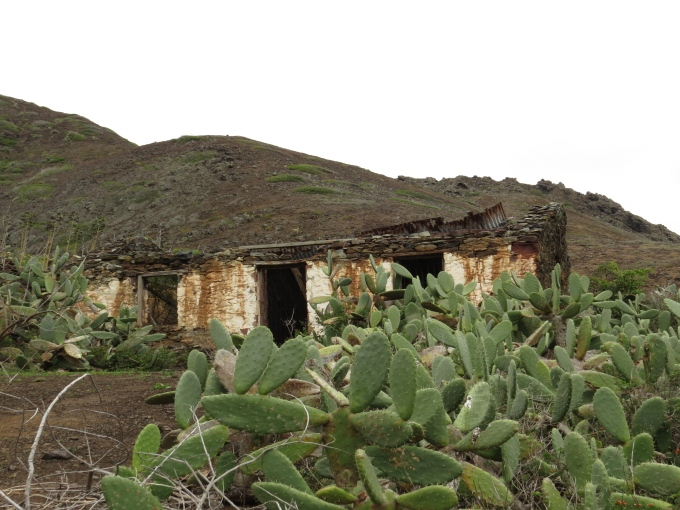 old house with prickly pear