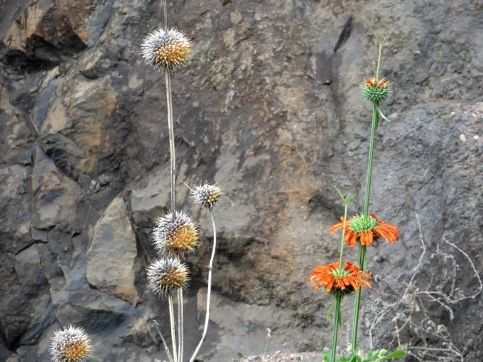 flower break on jacobs ladder st helena island
