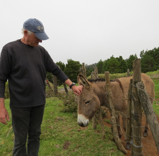 donkey sanctuary on st. helena island