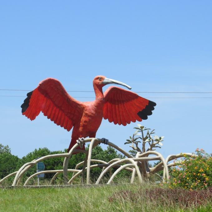 scarlet ibis on the road to cayenne
