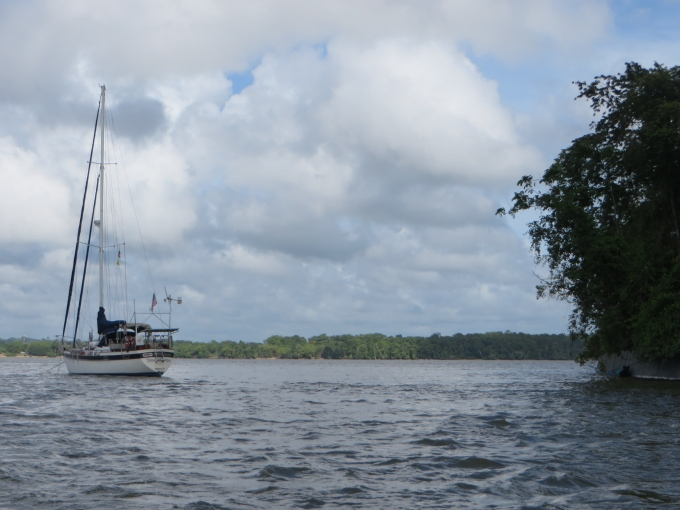 nine of cups is moored in french guiana