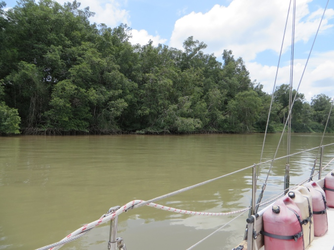 brown calm water in french guiana