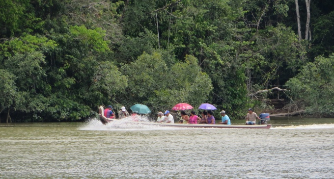 pirogues and parasols in french guiana