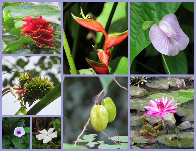 flowers at peperpot nature park suriname