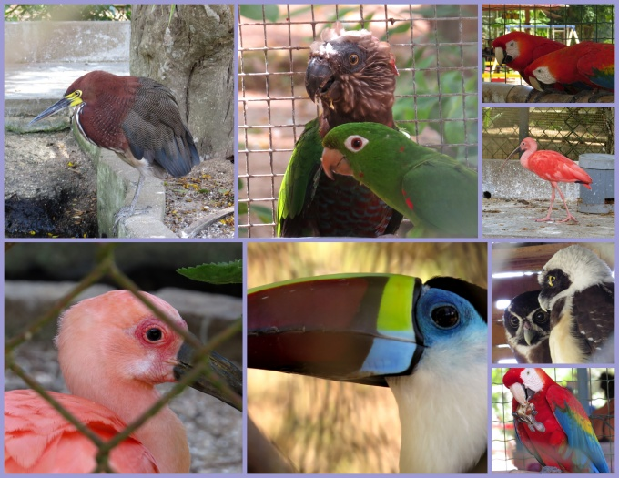 birds paramaribo zoo