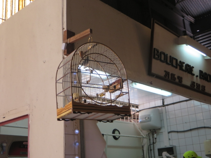 bird cage in paramaribo