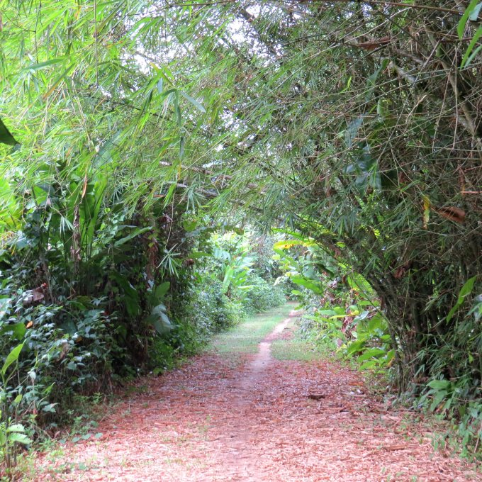 trail at peperpot nature park suriname