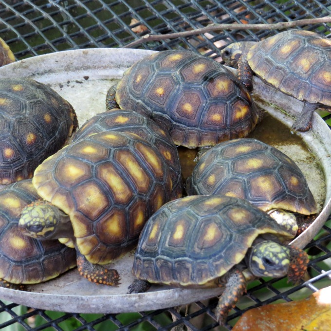 baby turtles butterfly park paramaribo