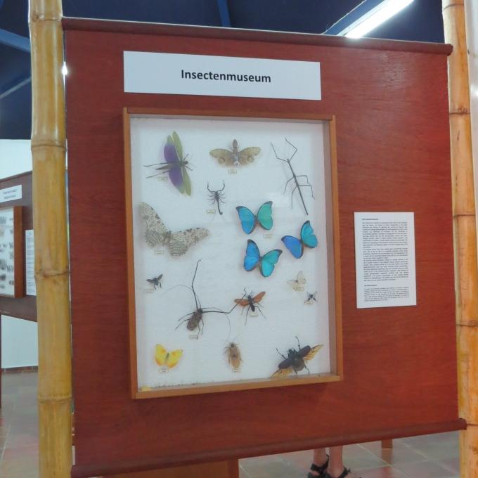 insect museum paramaribo
