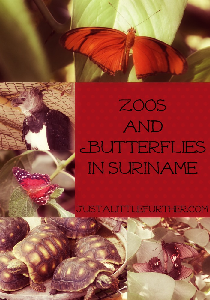 zoos and butterflies