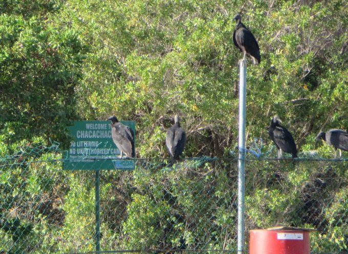 vultures on the welcome sign