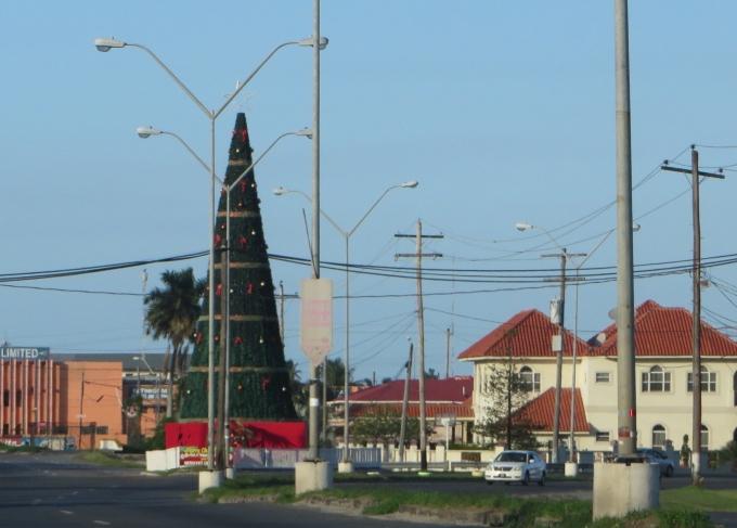 christmas tree in guyana