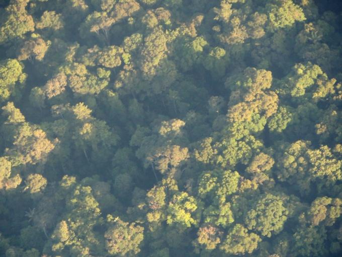 broccoli rainforest in guyana