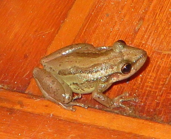 frog aboard