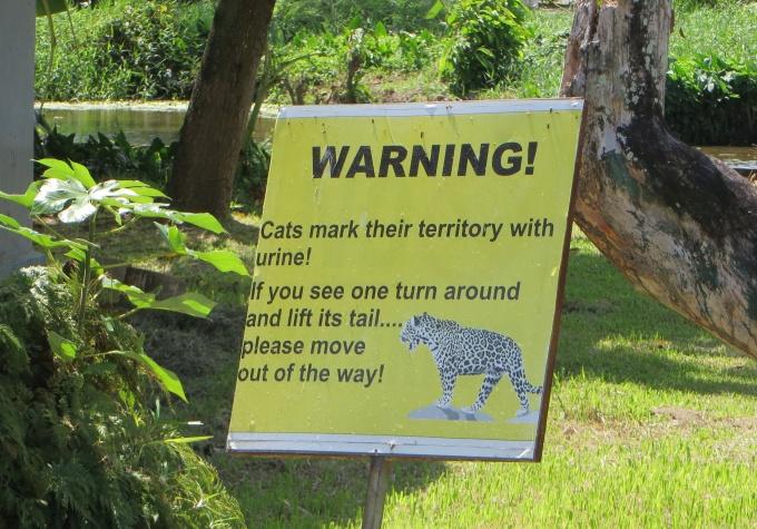 warning cat urine