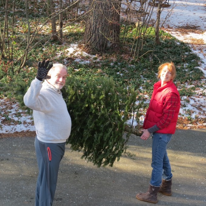 lugging the tree outside