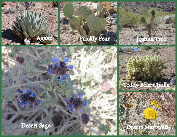 desert plants in nevada
