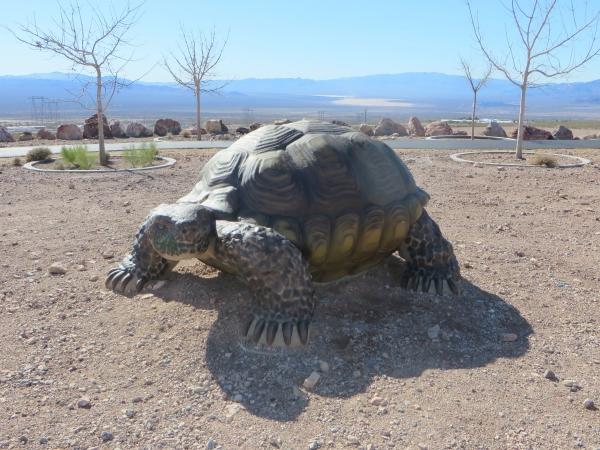 bootleg canyon nevada desert tortoise
