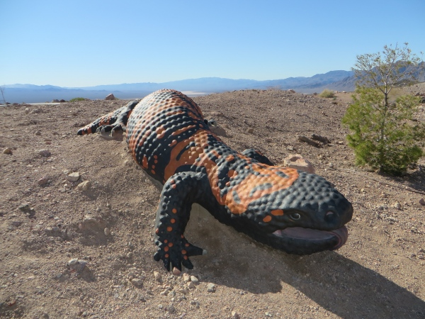 bootleg canyon nevada gila monster