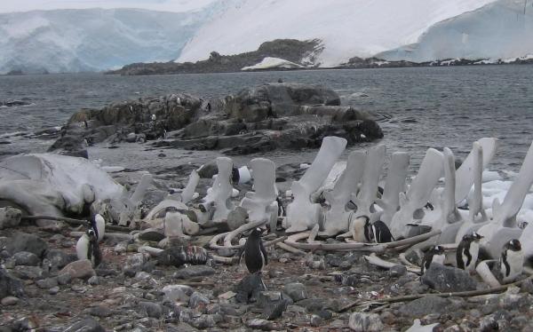 antarcticia