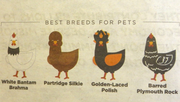 best chickens for pets