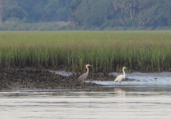 wading birds on a grassy shore