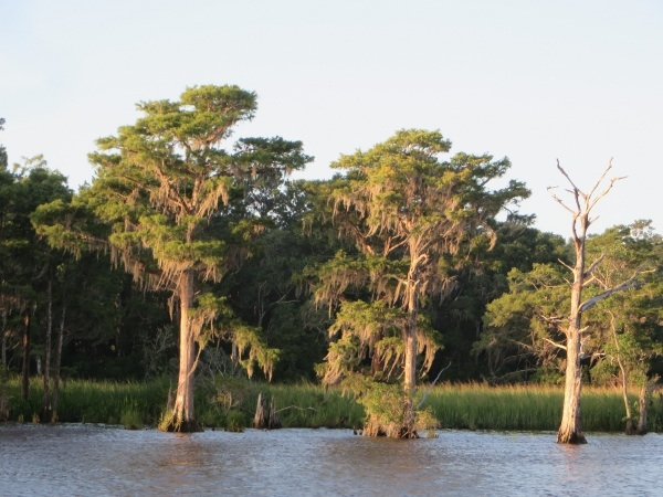 spanish moss along the intracoastal waterway