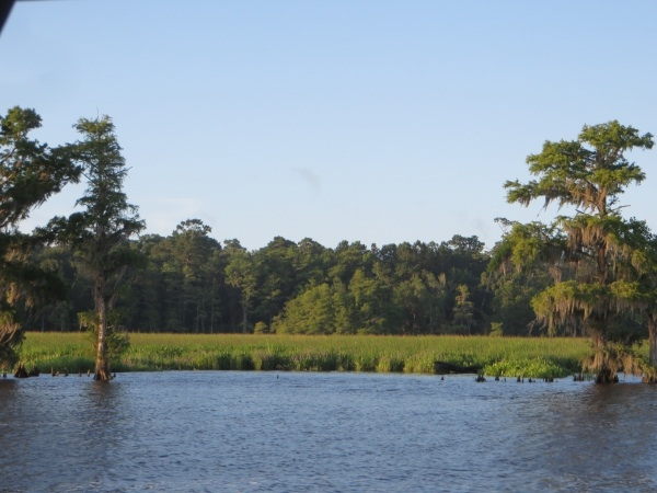 rice fields along the intracoastal waterway