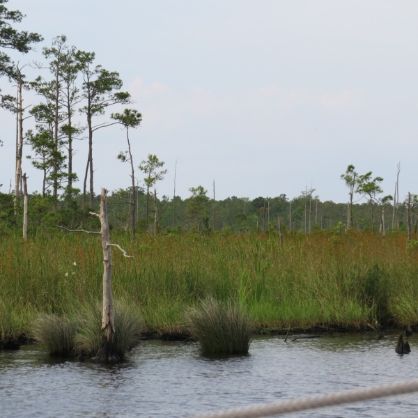 grassy wetlands on the intracoastal waterway
