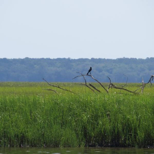 marshland grass