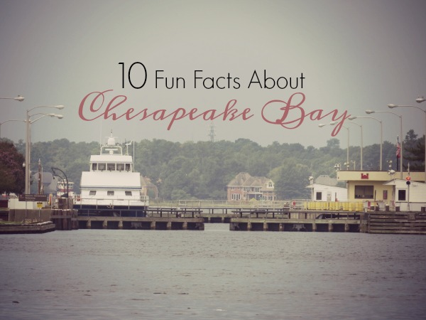 10-fun-facts-graphic