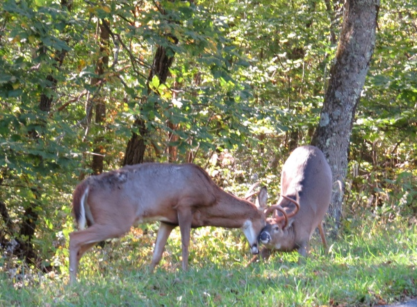 bucks sparring shenandoah np