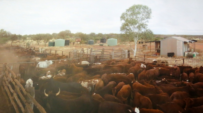 cattle station in waroona australia